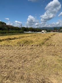 米農家です。